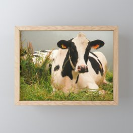 Holstein cow facing camera Framed Mini Art Print