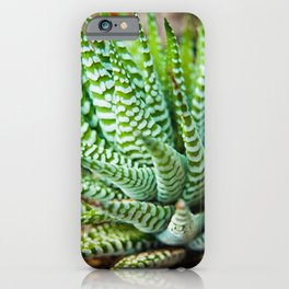 Succulent 2 Botanical / Nature Photograph iPhone Case