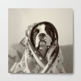 Obi Wan (Buck the world's most lovable boxer dog) Metal Print