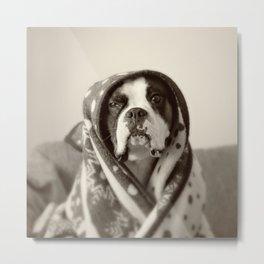 Obi Wan (Buck the world's most lovable boxer dog) Metal Print