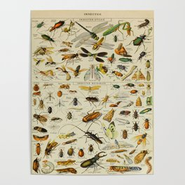 Insects Vintage Scientific Illustration French Language Encyclopedia Lithographs Educational Poster