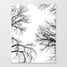 Sky Roots Canvas Print
