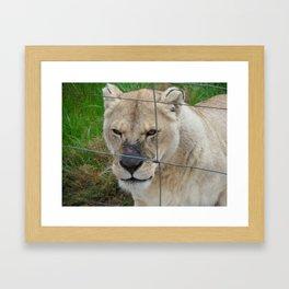 Scar Framed Art Print
