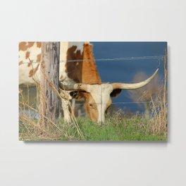Long Horn Cow Farm Style Photography Metal Print