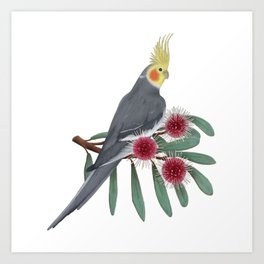 Normal Grey Cockatiel Art Print