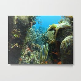 Peeking through the coral forest Metal Print
