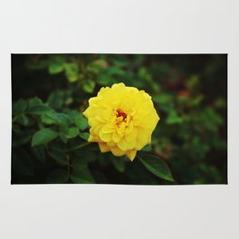 Autumn Yellow Rose Rug