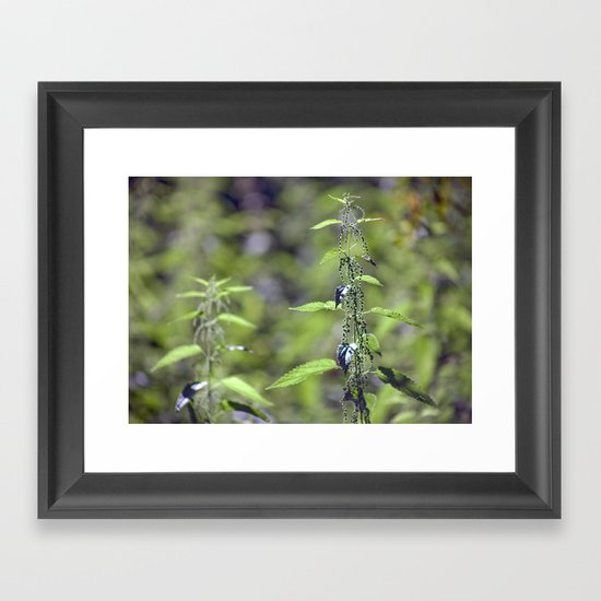 Stinging Nettle 5288 Framed Art Print