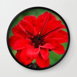 Dahlia 'Bishop of Llandaff' Crimson Red Flower Wall Clock