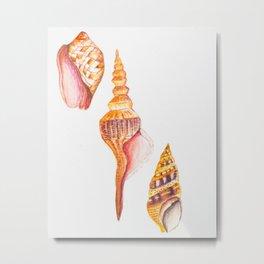 Seashell #2 Metal Print
