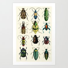 Jeweled Beetles  Art Print