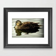 Black Duck Framed Art Print
