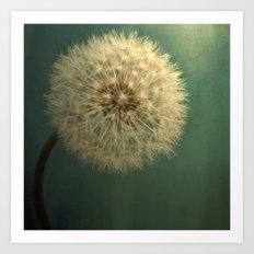 Dark Teal Texture with Dandelion Soft White Flower Art Print