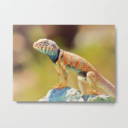 Mojave Callared Lizard Metal Print