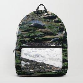 Seals Backpack