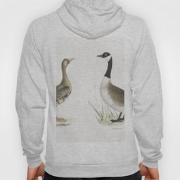 236 White-fronted Goose (Anser albifrons) 237 Wild Goose (Anser canadensis)  from Zoology of New Yor Hoody