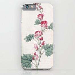 Flower 1306 malva munroana Mr Munro s Mallow14 iPhone Case