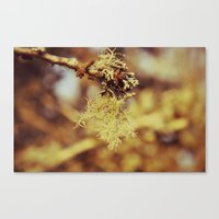 spanish Canvas Prints featuring Spanish moss by  Alexia Miles photography