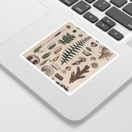Botany Chart Sticker