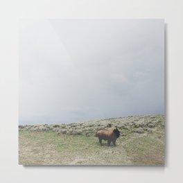 Hillside Bison Metal Print