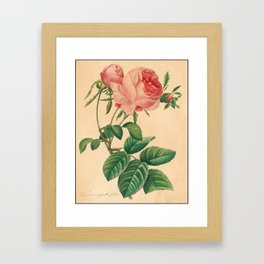 Rose Flower Color Pencil Hand Drawing Framed Art Print