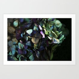 hydrangea I Art Print