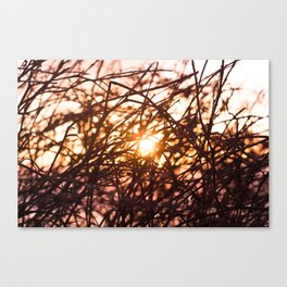 Let the light shine in.  Canvas Print