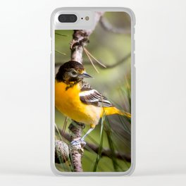 Oriole and Pine cone Clear iPhone Case