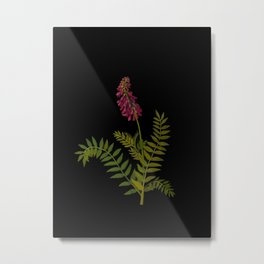 Hedysarum Alp Mary Delany Delicate Paper Flower Collage Black Background Floral Botanical Metal Print