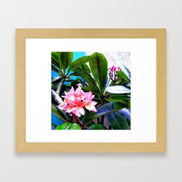 Tropical 2. Framed Art Print