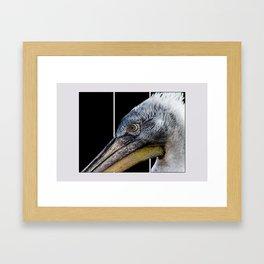 Pelican Cartoon  Framed Art Print