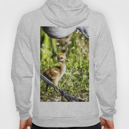 Watchful Eye Hoody