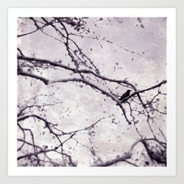 Winter Crow Art Print