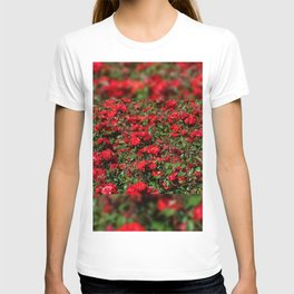 Red roses bunches grow in park T-shirt