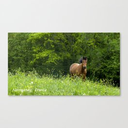 Horse in a pature Canvas Print