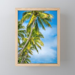 Looking up at some beautiful coconut palm trees at Kuto Bay. Framed Mini Art Print
