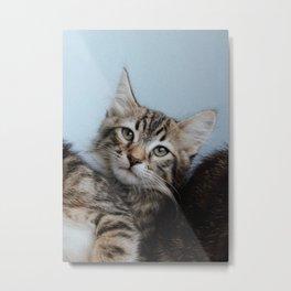 Kitten staring Metal Print
