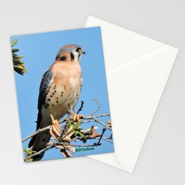 American Kestrel on Watch in La Verne Stationery Cards