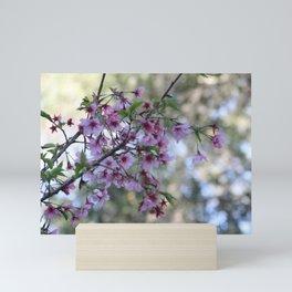Spring time - Sacura Mini Art Print