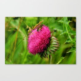 The thistle and a fly Canvas Print
