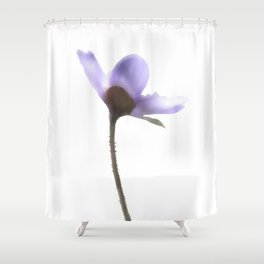 Flowers Anemone Hepatica reaching for the sun Shower Curtain