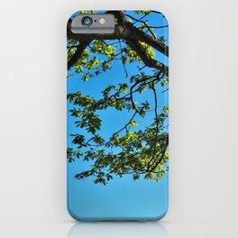 Overhead Oak Tree Branch iPhone Case