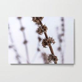 Winter Plant 2 Metal Print