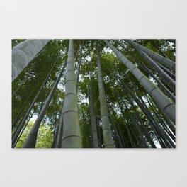 Bambu forest Canvas Print