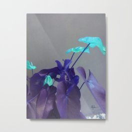 Turquoise Anthuriums Metal Print