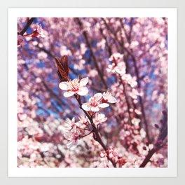 Delicate Pink Crabapple Tree Blooms Art Print