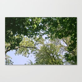 Leaves & Branches Canvas Print