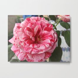 Candy Rose Metal Print