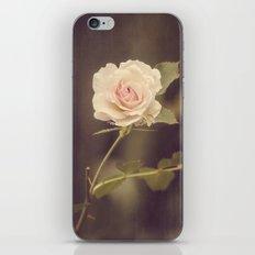 La Bella Rosa iPhone & iPod Skin