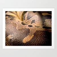 anaconda Art Prints featuring Anaconda by theGalary